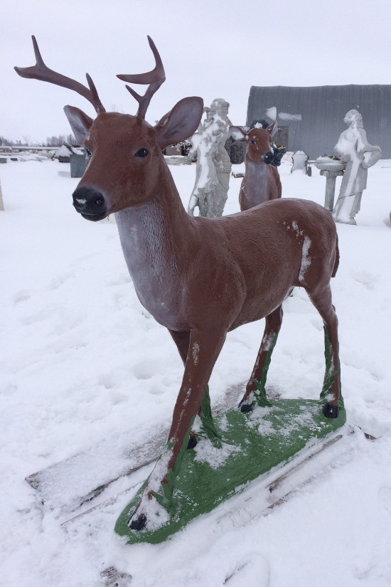 Life Size White Tailed Buck