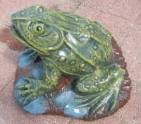 Large Frog on Lily Pad